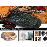 Pedra Aquecida + Bebedouro + Cálcio + Fóssil | Répteis