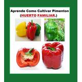 Aprende El Cultivo De Pimenton