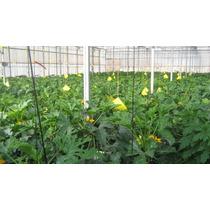 Trampas Amarillas Para Invernadero, Riego, Hidroponia
