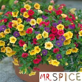 1600 Sementes De Flor Petúnia Multicolorida - Frete Grátis -