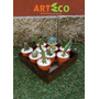 Cajón Con 10 Variedades De Suculentas Y Cactus