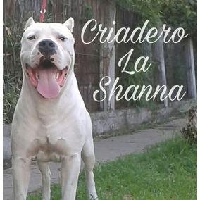 Dogos Argentinos F.c.a. Criadero La Shanna.
