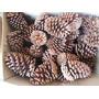 Pinha Natural Decorativa Decoração Artesanato 50 Und