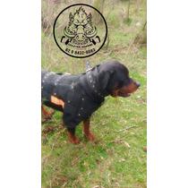 Colete Para Cachorro Caça De Javali Proteção Tamanho M