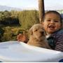 Cachorros Golden Retriver Inscritos