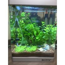 Aquario Boyu 50lt Plantado Completo - Aceito Troca