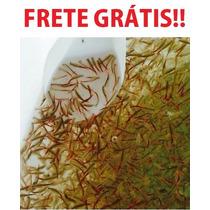 Cultura Inicial Artemia De Água Doce/ Branconetas +spirulina