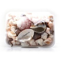 Paquete De Caracoles Y Conchas