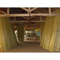 Bambu Cana Da Índia Tratado E Selecionado.