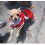 Chihuahua Cabeza De Manzana Solo Mascota(castrada)