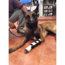Ferula Para Perro Carpos Protesis Soporte Pata Chico Y Media