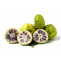 Planta De Noni 20cm Exotica Frutal