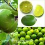 Limon Sutil, Con Certificación De Senasa Z/ Mataderos