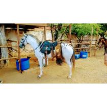 Vendo Um Cavalo Marcha Picada Pura Ótimo Muito Cômodo,