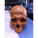 Cranio Caveira Em Fibra