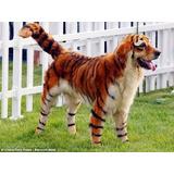 Tinta Para Pelos De Cachorros Cães Gatos Pelagem Salmão