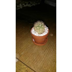 cactus miniatura con maceta plastico regalo o recuerdo
