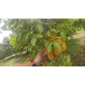 10kg Fruta Carambola D Primera Envio Gratis Todo Mexico