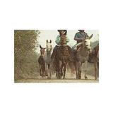 Os Tropeiros - Globo Rural - Cavalos - Série Completa