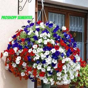 Sementes Sortidas Da Flor Petunia Multiflora Anã Pendente