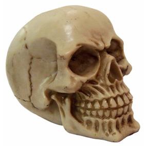 Crânio Caveira Newton Decorativo Halloween - Resina