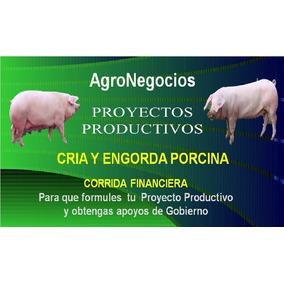 Corrida Financiera Cerdos Inicia Negocio Apoyos De Gobierno