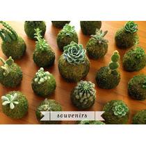 Kokedama Cactus Souvenir Regalo Empresarial Jardin Redondo