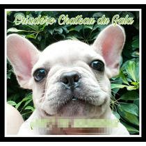Cachorro Bulldog Frances Macho Cremita. Con Fca