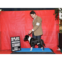 Staffordshire Bull Terrier (staffy), Serv. De Monta