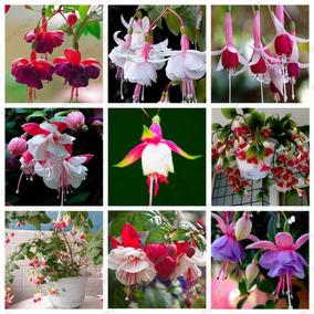 10 Sementes Brinco De Princesa Cores Mix Varias Cores Rosas