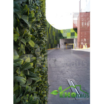 Muro Verde, Arbustos, Setos, Plantas Para Exterior
