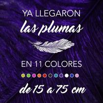 Plumas De Avestruz Minis De 15 A 24 Cm, En 11 Colores.