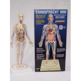 Cuerpo Humano Hombre Transparente Armable Con Base Giratoria