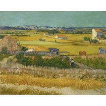 Lienzo La Cosecha Vincent Van Gogh Sin Fecha 50 X 63 Cm