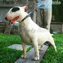 Bull Terrier Criadero La Shanna F.c.a Los Mejores Seguro