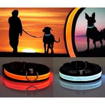 Collar Perro Led Luminoso - Te504