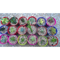 Suculentas Cactus Maceta Nº 6 Piedras Decorativas Naturales