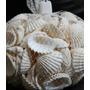 Conchas - 500 Gramas | Artesanato Pulseira Colar Branco