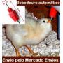 10 Bebedouros Automáticos Codornas,galinhas,ovo,patos,frango