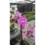Orquideas Hermosas