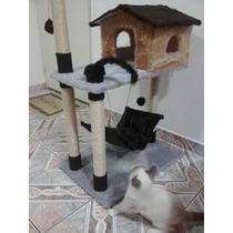 Arranhador Gato Casa Com Rede