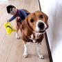 Fantasia Para Cachorros/cães Cowboy Peão Divertida