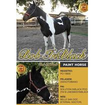 Cobertura De Cavalo Paint Horse Preto E Branco Homozigoto