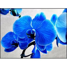 15 Sementes De Orquídea Azul - Para Mudas - Frete Gratis