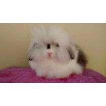 Mini Coelho Fuzzy Lop