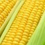 Sementes De Milho Híbrido Verde Biomatrix Bm 3061 1kg