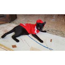 Chamarra Sudadera Adidog Para Perro Gato Gorro Chica Med G
