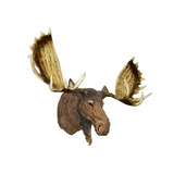 Cabeça Moose (alce) Taxidermia Decorativo