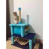 Rascador-cucha Para Gato Precio Especial Mes Aniversario