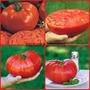 100 Sementes Do Tomate Gaucho Gigante Promoçao!!!
